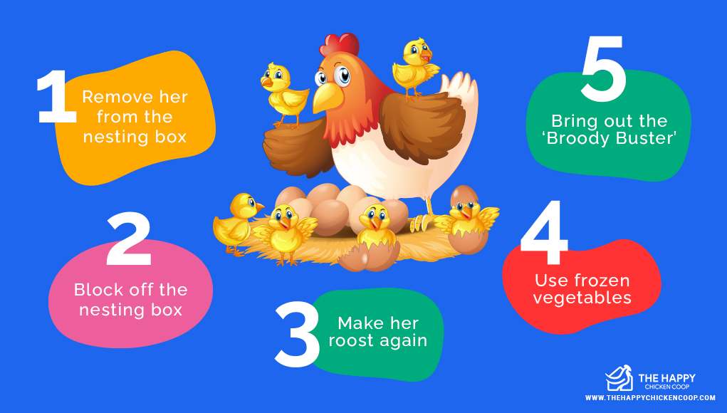 How to Stop a Broody Hen