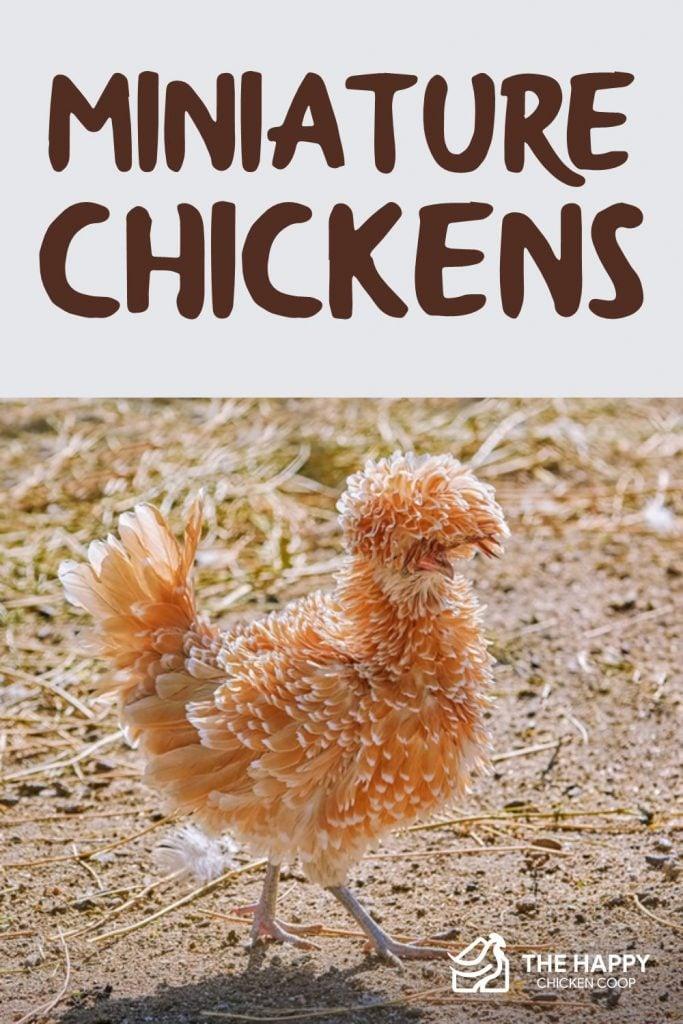 Miniature Chickens