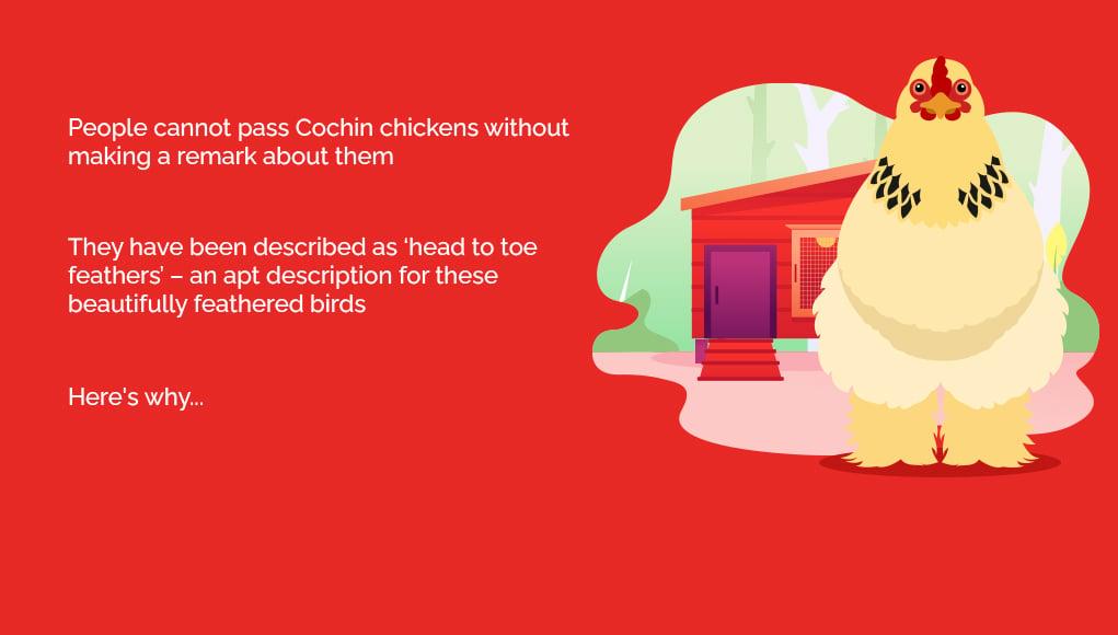 Cochin Breed