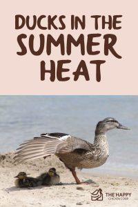 Ducks In The Summer Heat