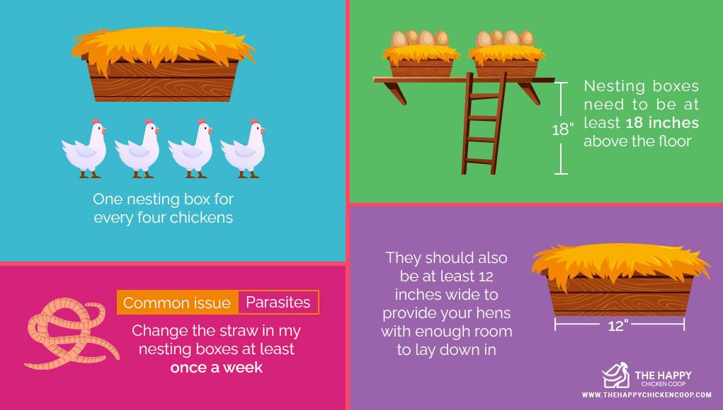 Chicken Lay An Egg