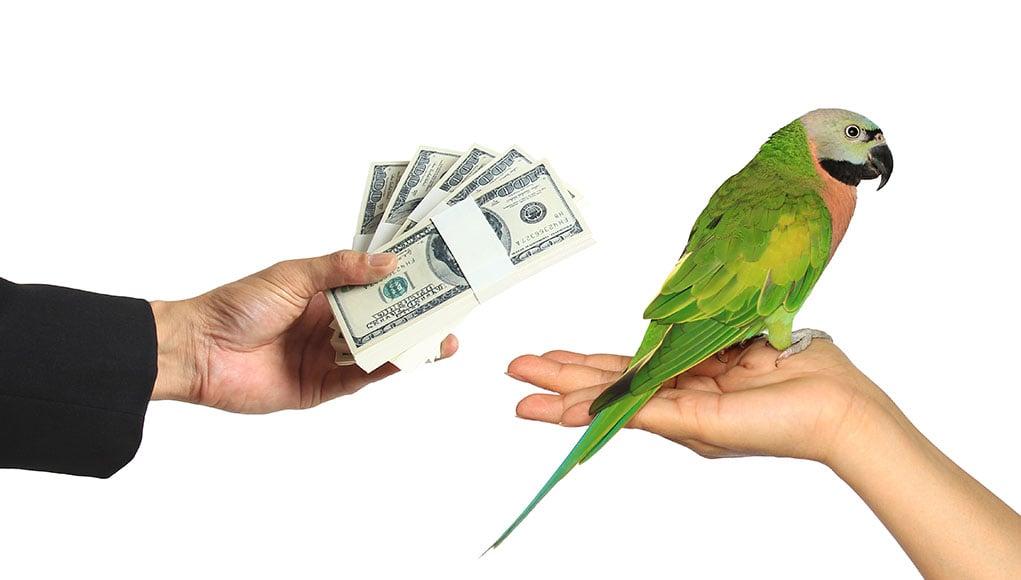 Pet Bird Cost