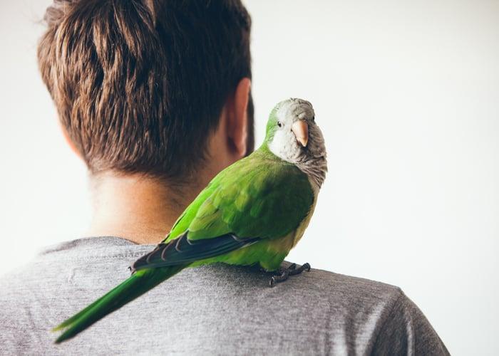 Companion Birds Monk Parakeet