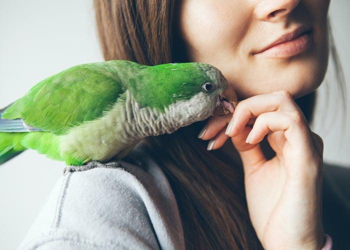 Friendliest Pet Bird