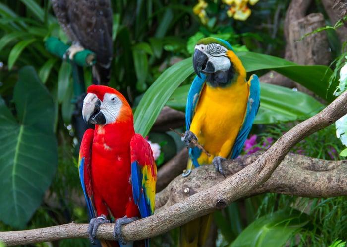 Macaw pet bird