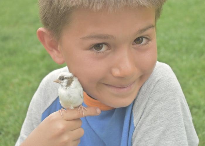 pet bird and children finch