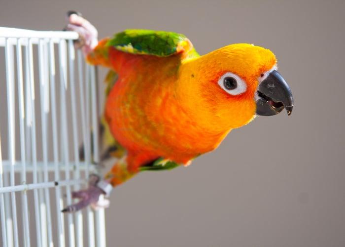 tricks to teach your bird