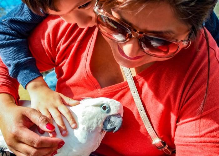 pet bird and children Cockatoo