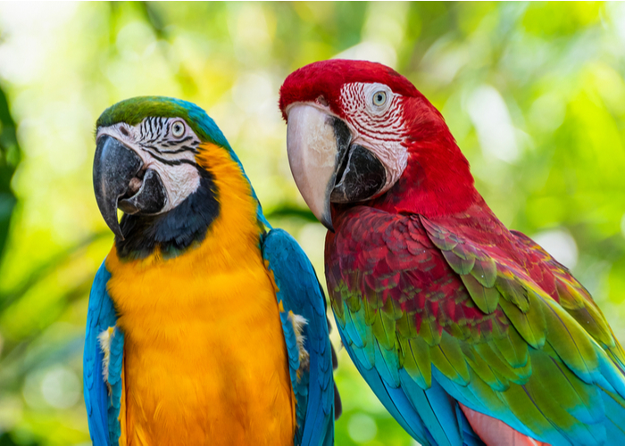 tricks to teach birds