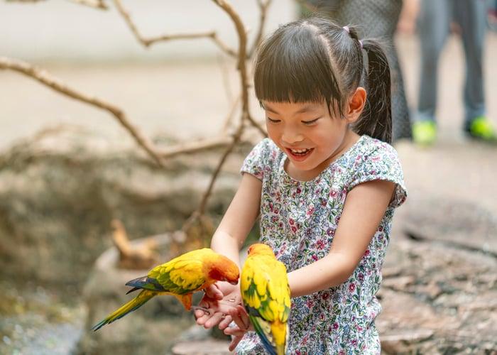 pet bird for children Conure