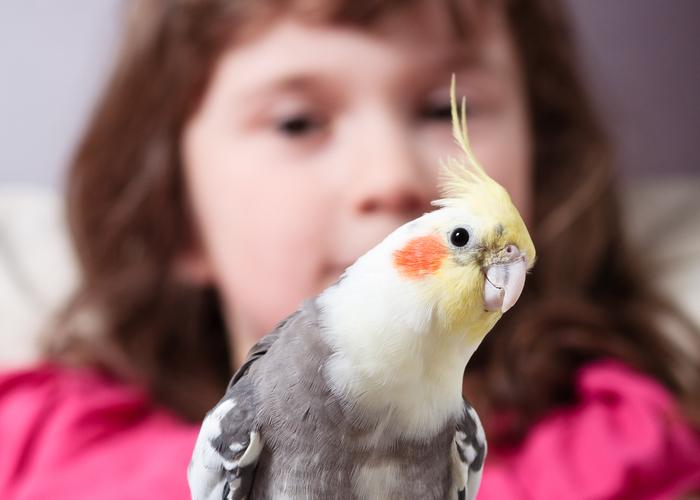 pet birds for children Cockatiel