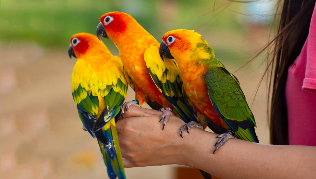 Beginners Guide to Pet Birds